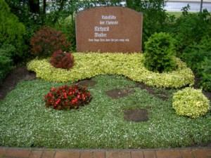 Kirschblüte- Geburstag-Vogelversammlung 139